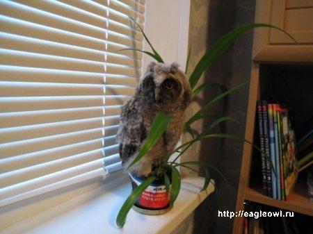 Чем кормить совёнка в домашних условиях 988